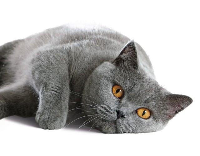 Tutto per il tuo gatto