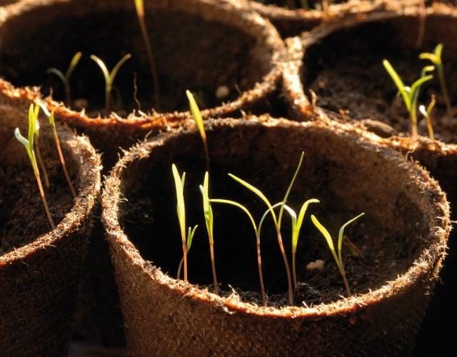 Sementi per il tuo giardino