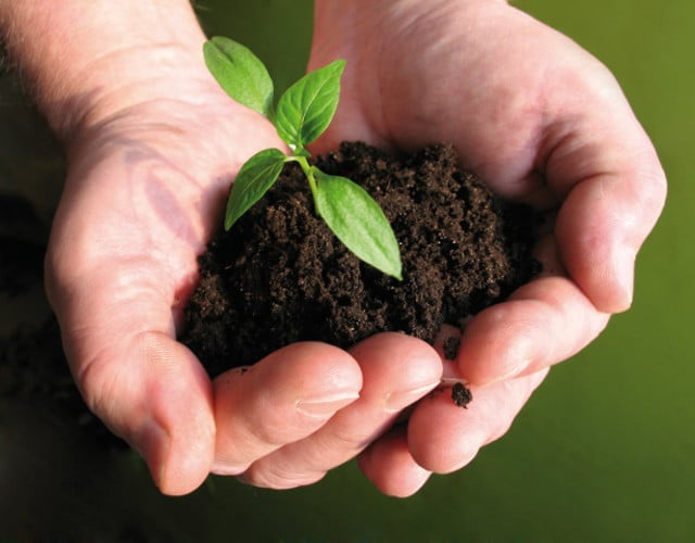 Pflanzen- & Insektenschutz