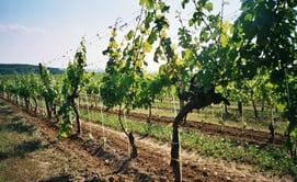 Frutticoltura & Viticoltura
