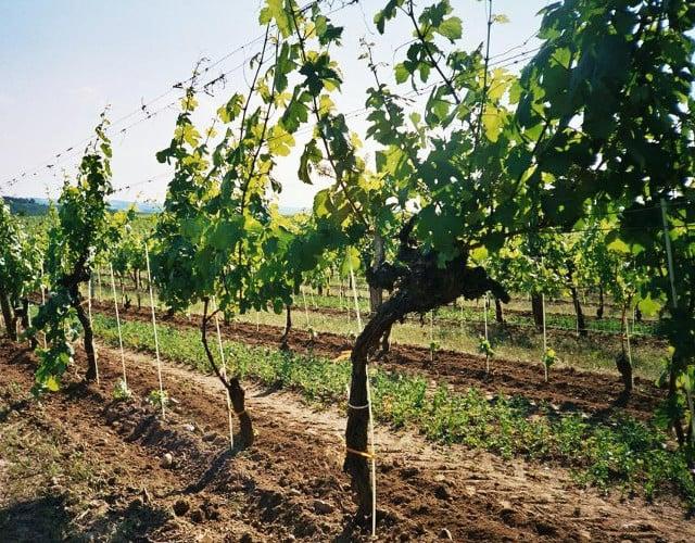 Obst- & Weinwirtschaft