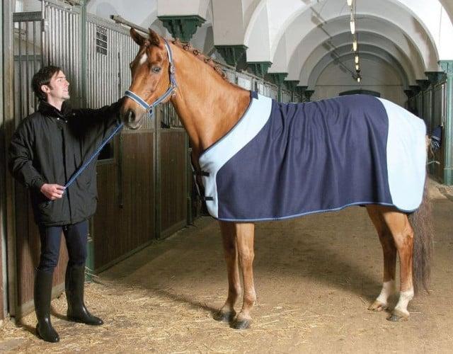 Prodotti per cavalli