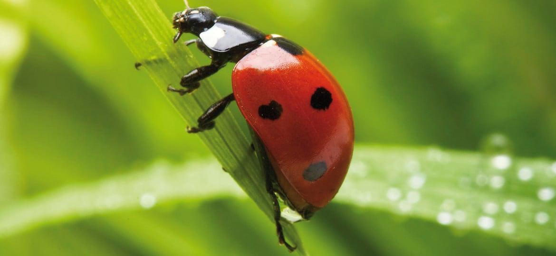 Prevenzione delle infestazioni da insetti