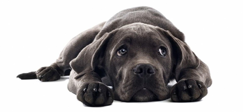 La cuccia del cane: il suo rifugio