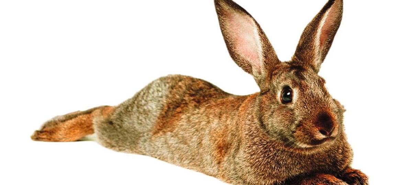 Flexguard: protezione veloce ed efficace contro animali selvatici