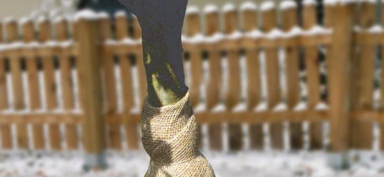 Pflanzen für den Winter vorbereiten