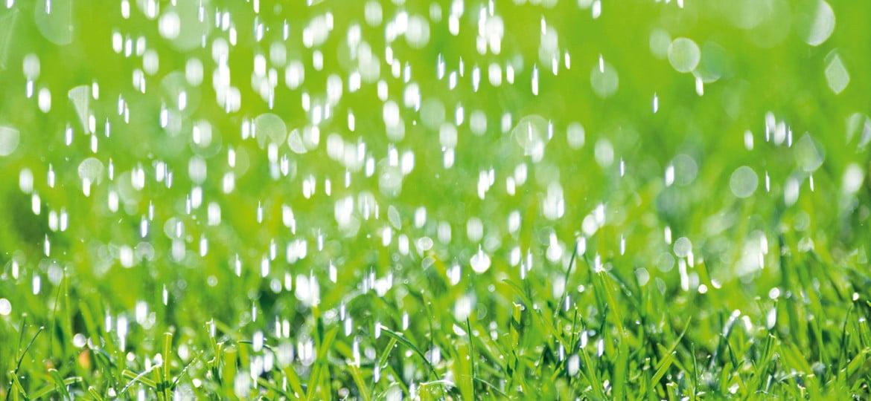 La giusta quantità d'acqua in giardino