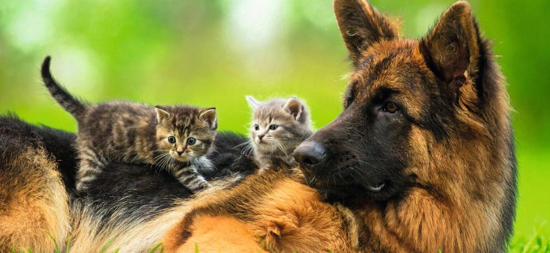 Die richtige Pflege hält Ihren Hund gesund