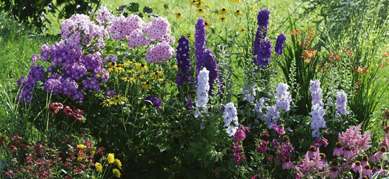 Il giardino di fine estate