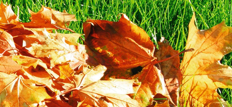 Lust und Last mit Herbstlaub