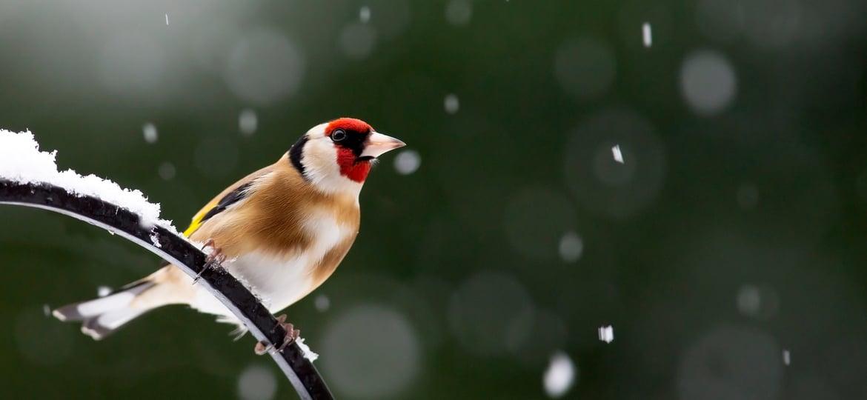 Wintervogelfütterung: Ein Herz für Vögel