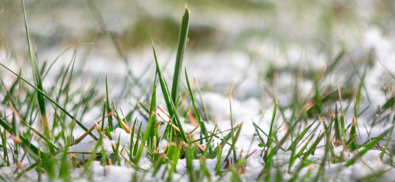 Rasen betreten bei Frost verboten