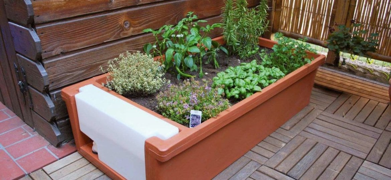 Colture miste: una guida per erbe aromatiche dalle Coltivatrici Sudtirolesi
