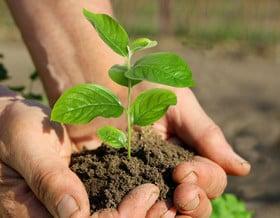 Chi ben semina, ben raccoglie