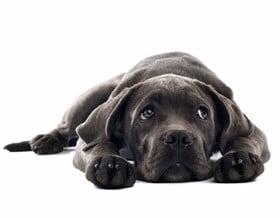 Gepflegtes Hundefell