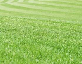Fertilizzante nutriente per tappeti erbosi