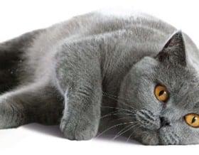 Katzen und Besitzer lieben Sauberkeit