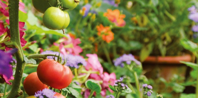 Naturgemäßes Gärtnern