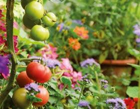 Giardinaggio naturale