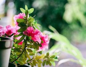 I segreti per un balcone fiorito