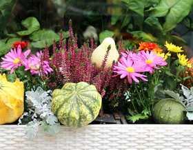 Herbstliche Balkonbepflanzung