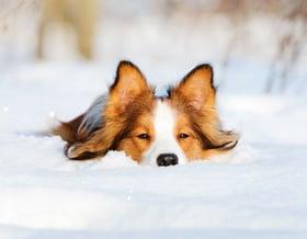 Il cane in inverno