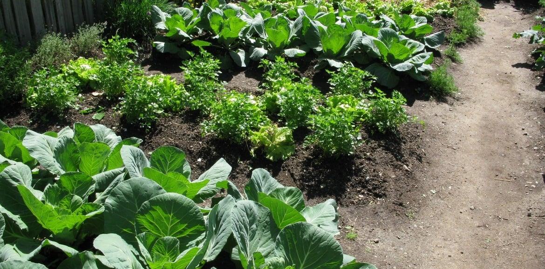 Planen Sie ihren Gemüsegarten!