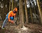 Sicherheit bei der Waldarbeit