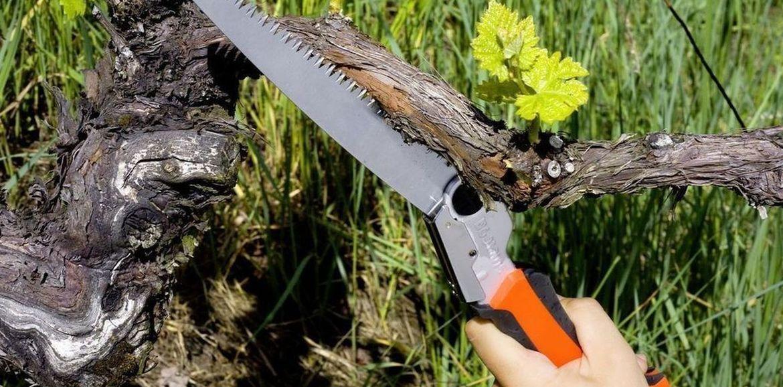 Obstbaumschnitt warum?