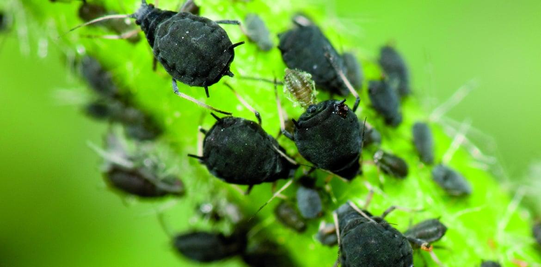 Natürliche Vorbeugung gegen Insektenplage