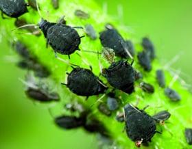 Schutz vor m cken und insekten gartenmarkt der lhg for Schwarze blumentopfe