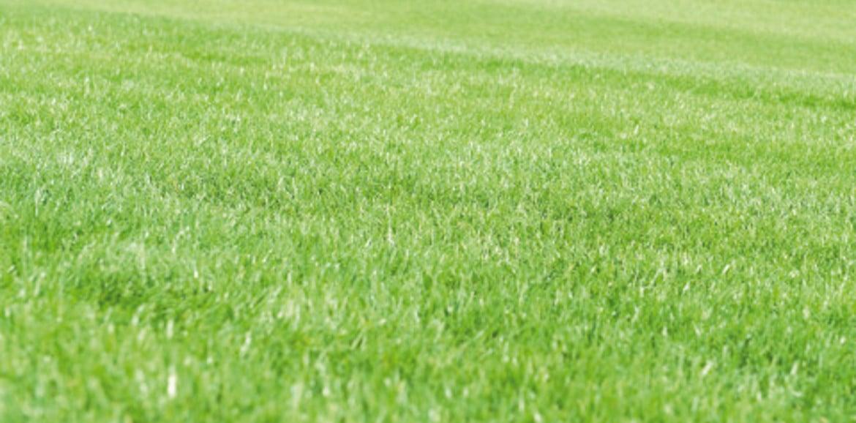 Unkraut im Rasen – was man dagegen tun kann