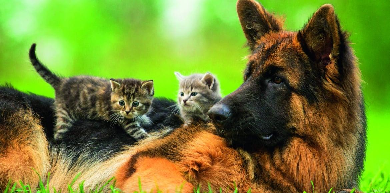 Vorbeugung und Beseitigung von Zecken und Flöhen bei Katzen und Hunden