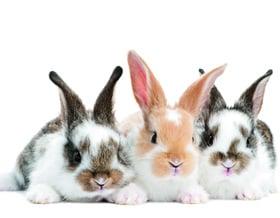 Il rifugio per conigli e altri roditori