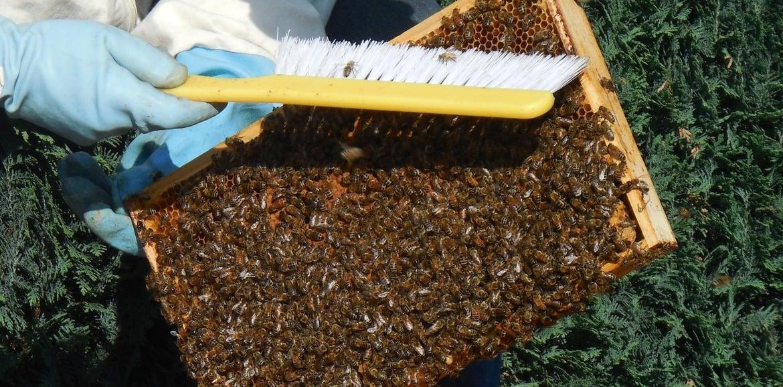 Kurzer Einstieg in die Imkerei – der Bienenstock