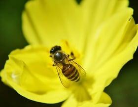 Alcune curiosità sulle api