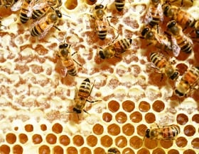 Den richtigen Standplatz für Bienenvölker finden