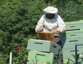 So macht die Biene keine Stiche
