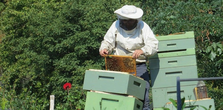 Per la protezione dell'apicoltore