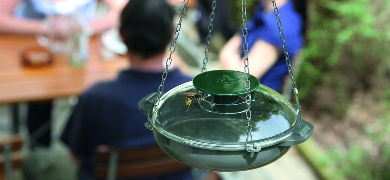 Eine Wespenfalle, die Bienen schützt?!