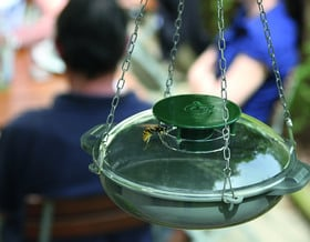 Una trappola per vespe che protegge le api!