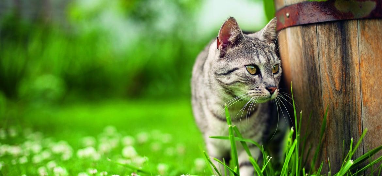 Vorbeugung und Beseitigung von Zecken und Flöhe bei Katzen