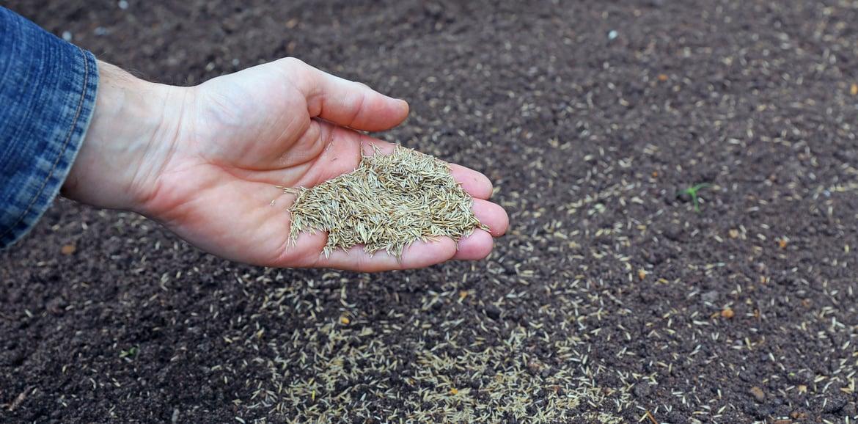 Rasen säen – Tipps und Tricks
