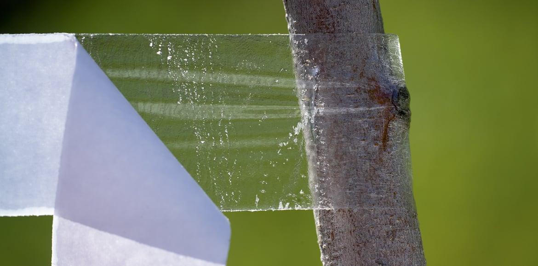 E le mosche... si attaccano