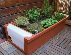 Das richtige Trocknen von Heilpflanzen