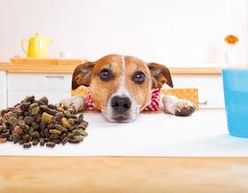 Tipps für die Hundefütterung