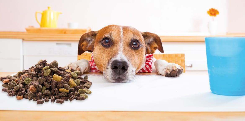 Come scegliere il mangime per il cane