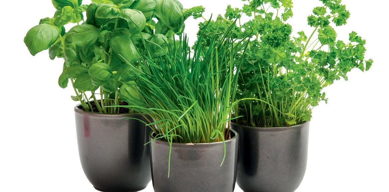 Le piante aromatiche in inverno