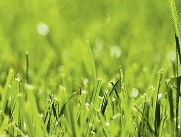 Pflanzen, Saatgut, Rasen