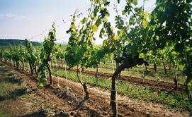 Obst-und Weinwirtschaft
